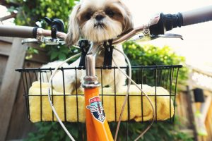 puppy on a bicycle